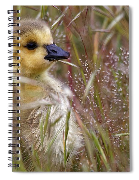 Gosling In The Meadow Spiral Notebook