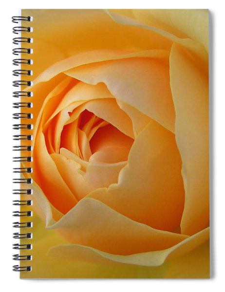 Graham Thomas Old Fashioned Rose Spiral Notebook