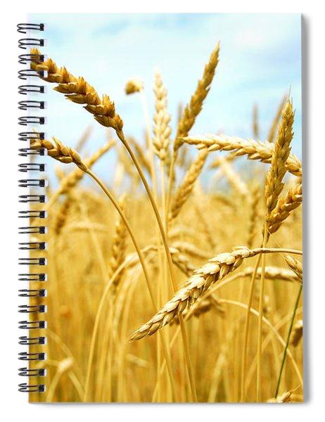 Grain Field Spiral Notebook