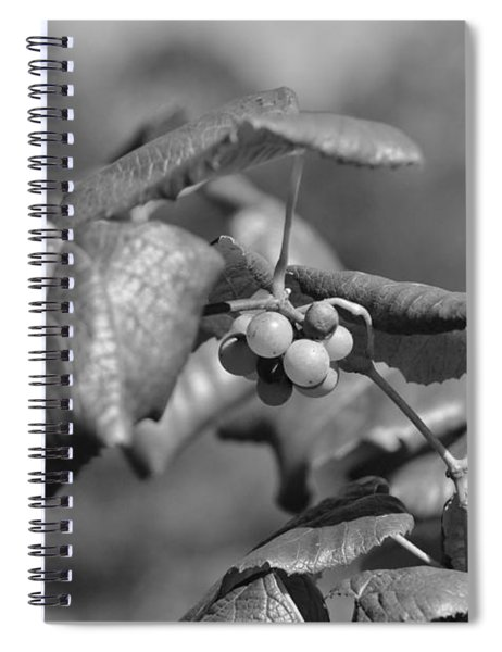 Grapes On The Vine  Spiral Notebook