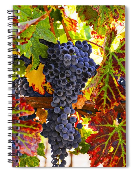 Grapes On Vine In Vineyards Spiral Notebook