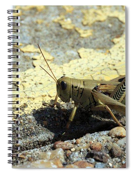 Grasshopper Laying Eggs Spiral Notebook