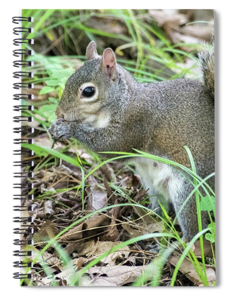 Gray Squirrel Eating Spiral Notebook