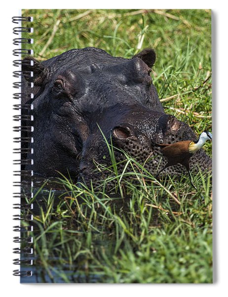 The Hippo And The Jacana Bird Spiral Notebook