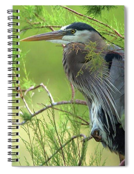 Great Blue Heron 4799-040518-1cr Spiral Notebook