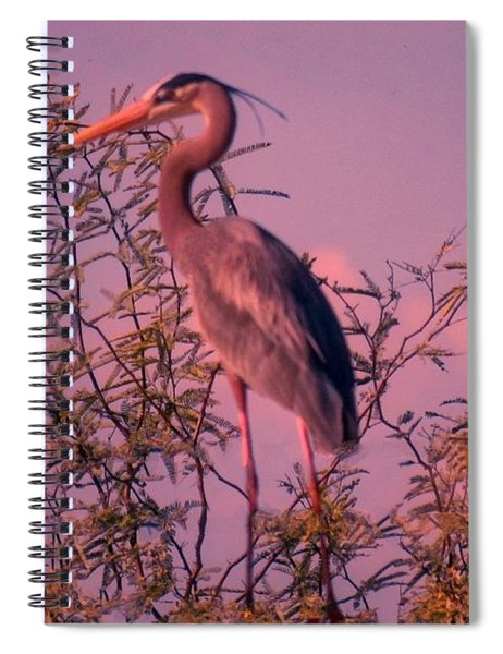 Great Blue Heron - Artistic 6 Spiral Notebook