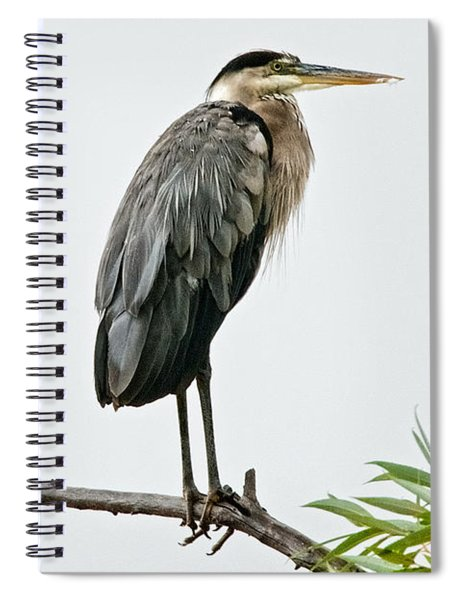 Great Blue Heron In The Rain Spiral Notebook