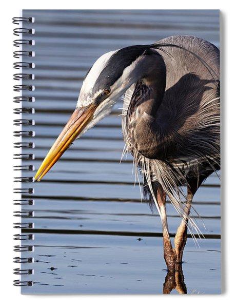 Great Blue Heron - Looking Hard Spiral Notebook