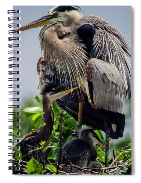 Great Blue Heron With Babies Spiral Notebook