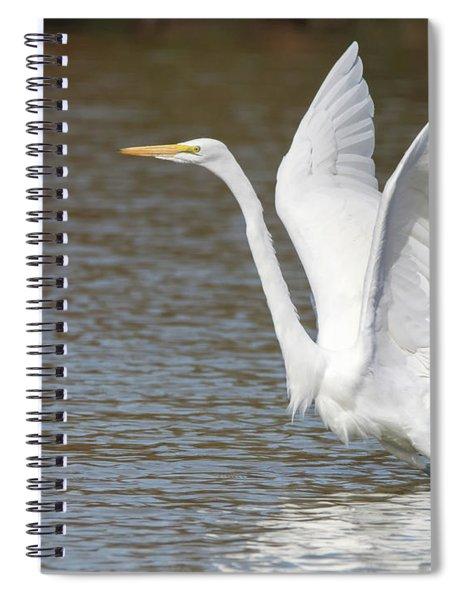 Great Egret 1626-031118-2cr Spiral Notebook