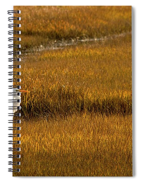 Great Egret In Morning Light Spiral Notebook
