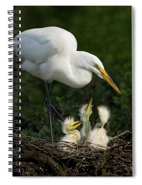 Great Egret With Chicks Spiral Notebook