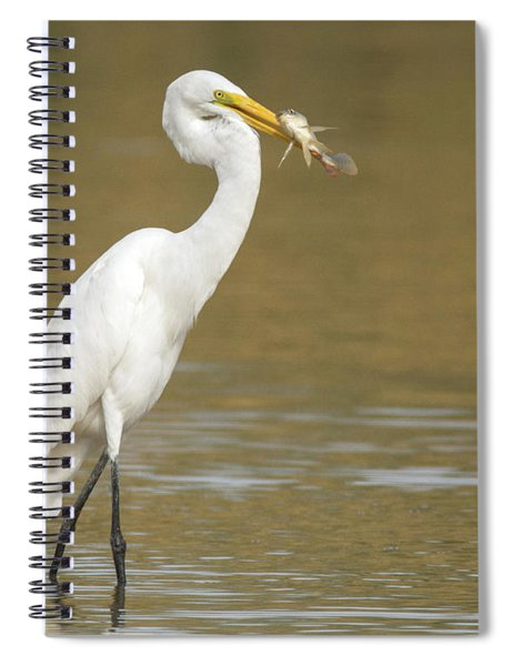 Great Egret With Fish 1356-111317-1cr Spiral Notebook