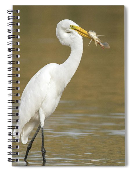 Great Egret With Fish 1356-111317-2cr Spiral Notebook