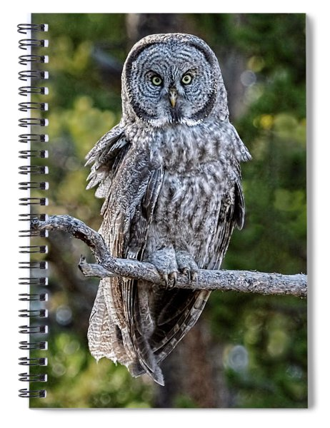 Great Grey Owl Yellowstone Spiral Notebook