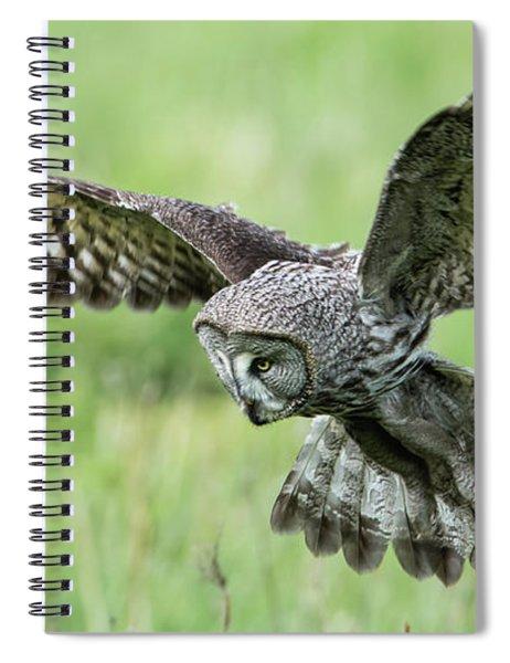 Great Grey's Focused Gaze Spiral Notebook