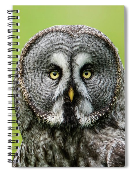 Great Grey's Portrait Closeup Square Spiral Notebook