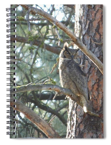 Great Horned Owl In A Tree Spiral Notebook