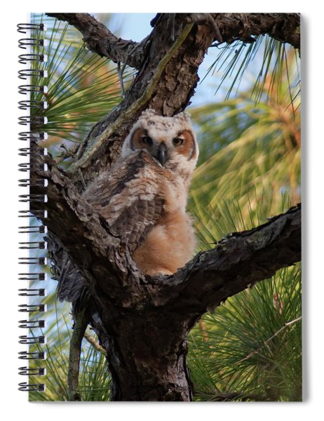 Great Horned Owlet Spiral Notebook