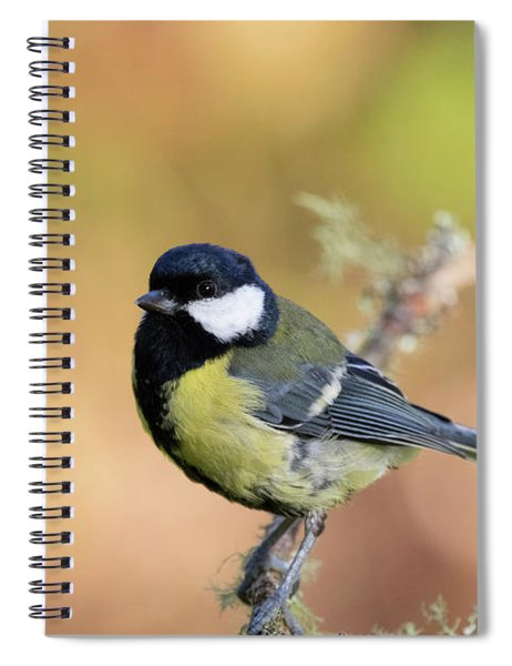 Great Tit - Parus Major Spiral Notebook