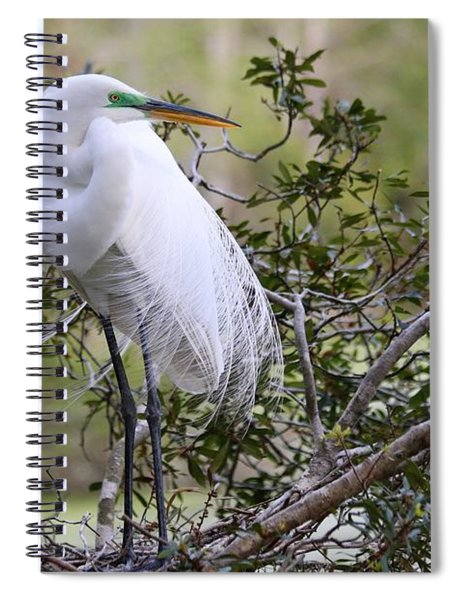 Great White Egret Spiral Notebook
