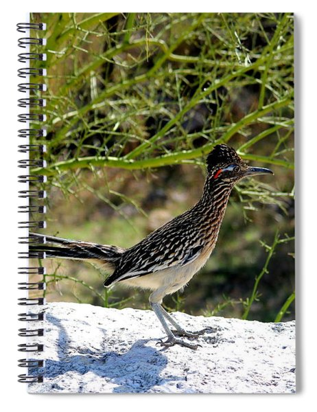 Greater Road Runner Spiral Notebook