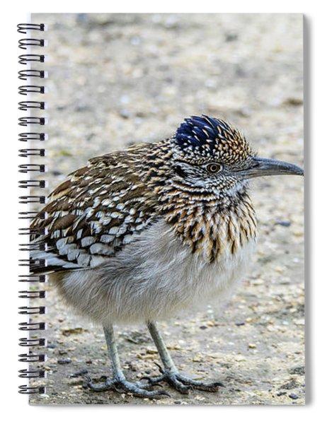 Greater Roadrunner Brief Pause Spiral Notebook