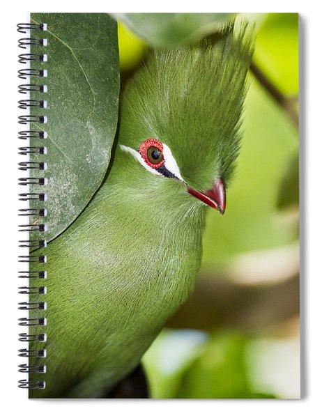 Green Turaco Bird Portrait Spiral Notebook