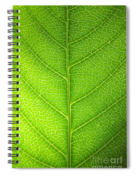 Green Botany -  Part 3 Of 3 Spiral Notebook