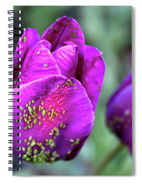 Aphids On Purple Tulips Spiral Notebook