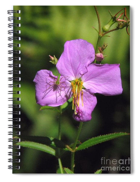Green Lynx Spider On Meadow Beauty Spiral Notebook
