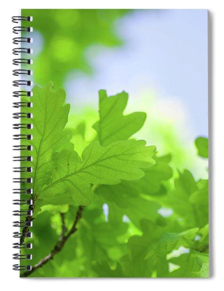 Green Oak Leaves Ad Blue Sky Spiral Notebook