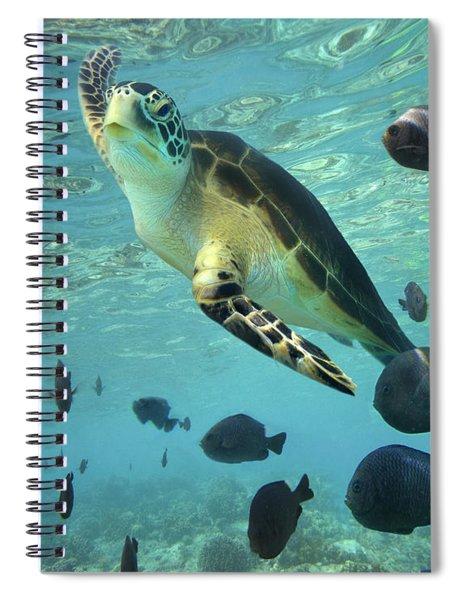 Green Sea Turtle Balicasag Island Spiral Notebook