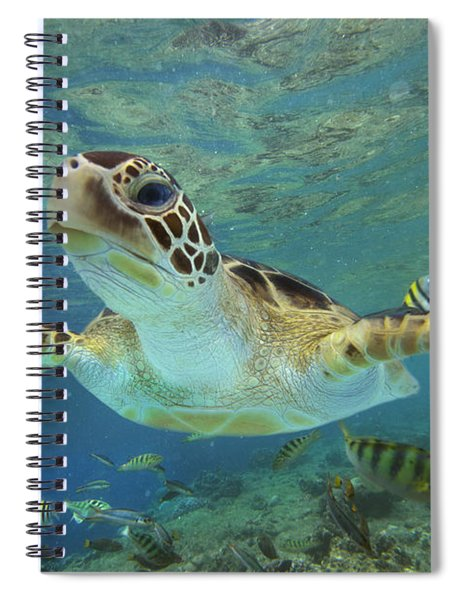 Green Sea Turtle Chelonia Mydas Spiral Notebook