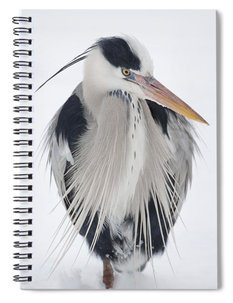 Grey Heron In The Snow Spiral Notebook