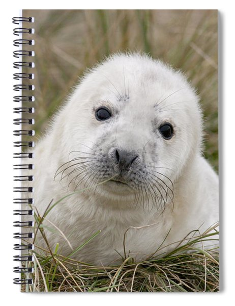 Grey Seal Pup Spiral Notebook