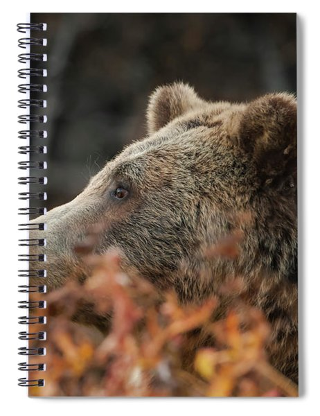 Grizzly Bear Portrait In Fall Spiral Notebook