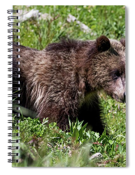 Grizzly Cub  Spiral Notebook