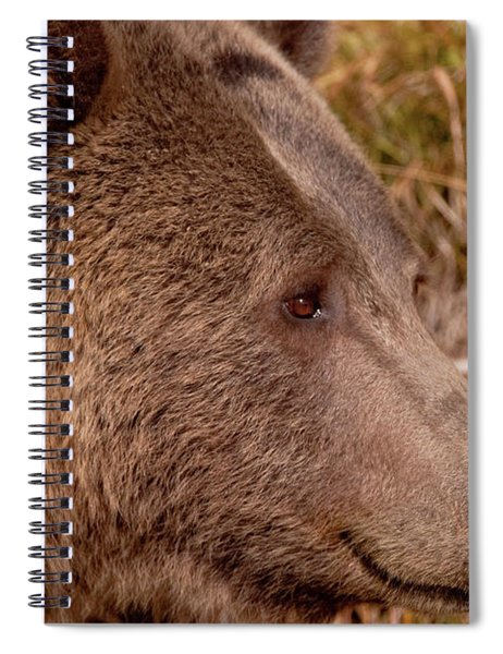 Grizzly Profile Spiral Notebook