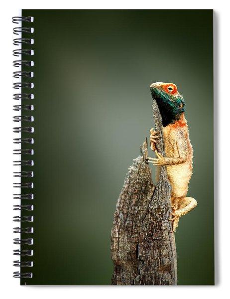 Ground Agama Sunbathing Spiral Notebook