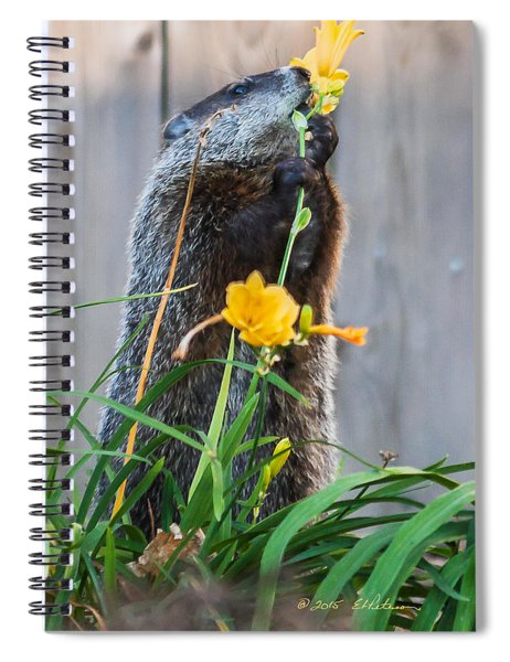 Spiral Notebook featuring the photograph Groundhog And Flowers by Edward Peterson