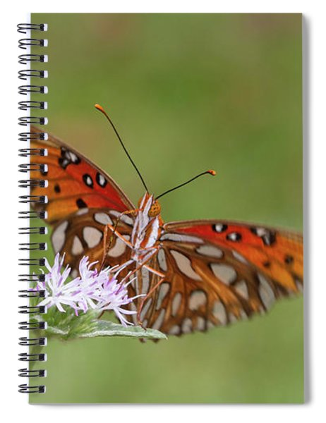 Gulf Fritillary On Elephantsfoot Spiral Notebook