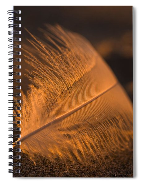Gull Feather At Sunset Spiral Notebook