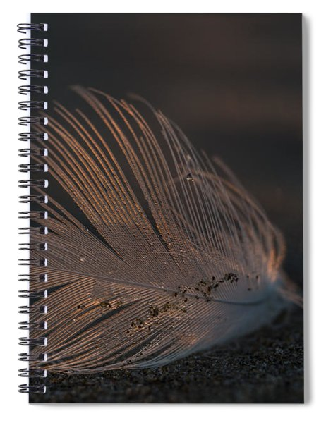 Gull Feather On A Beach Spiral Notebook