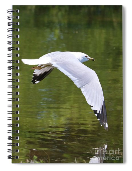 Gull Over Peaceful Pond Spiral Notebook