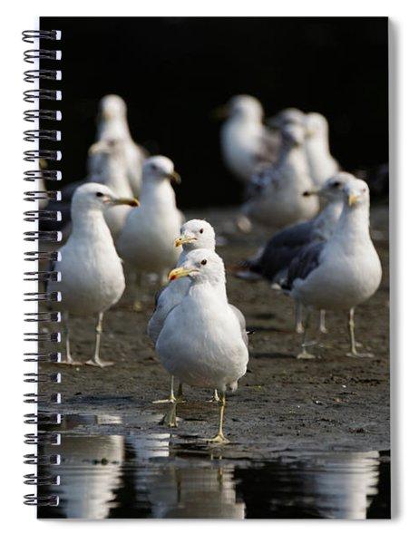 Gulls At The Beach Spiral Notebook