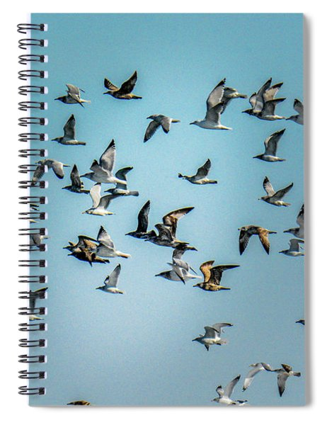 Gulls In Flight Spiral Notebook