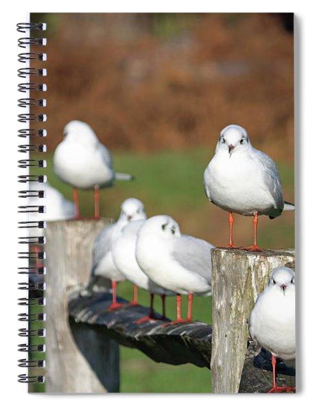 Gulls On A Fence Spiral Notebook