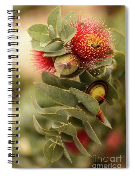 Gum Nuts Spiral Notebook