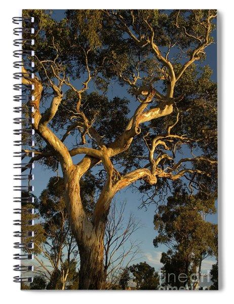 Gum Tree At Sunset Spiral Notebook